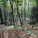 Forrest 5