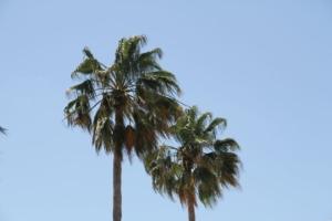 image miami beach 1